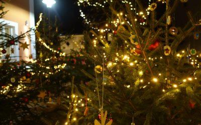 VG-Schulen und Kitas gestalteten zauberhaften Weihnachtswald